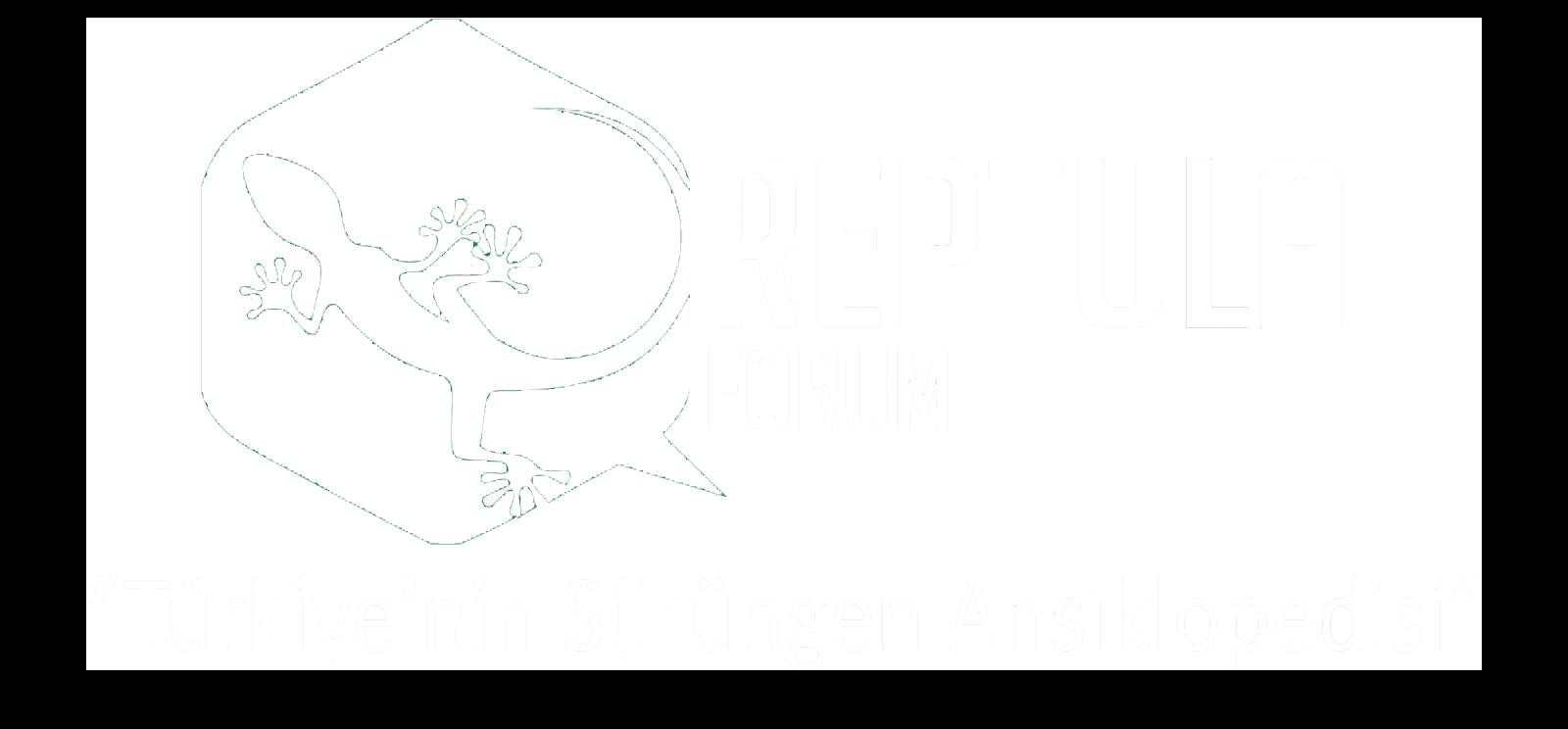 Reptula Forum