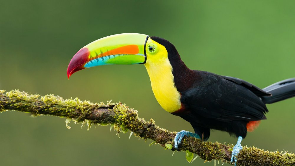 animals_hero_toucan.thumb.jpg.8699806091e53a23524ea1db53d95cc7.jpg