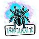 Tarantulalar.tr
